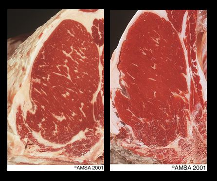 Beef quality grade pictures — 2