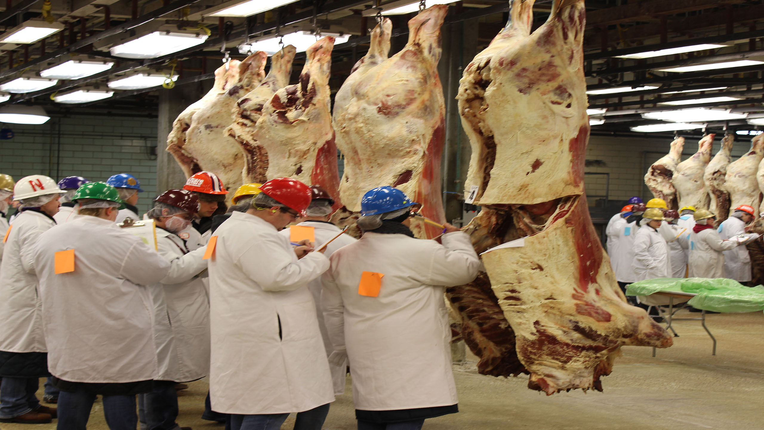 See the Results from the National Western Meat Judging Contest